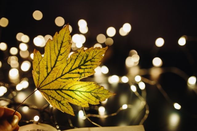 a leaf with fairy lights in the background